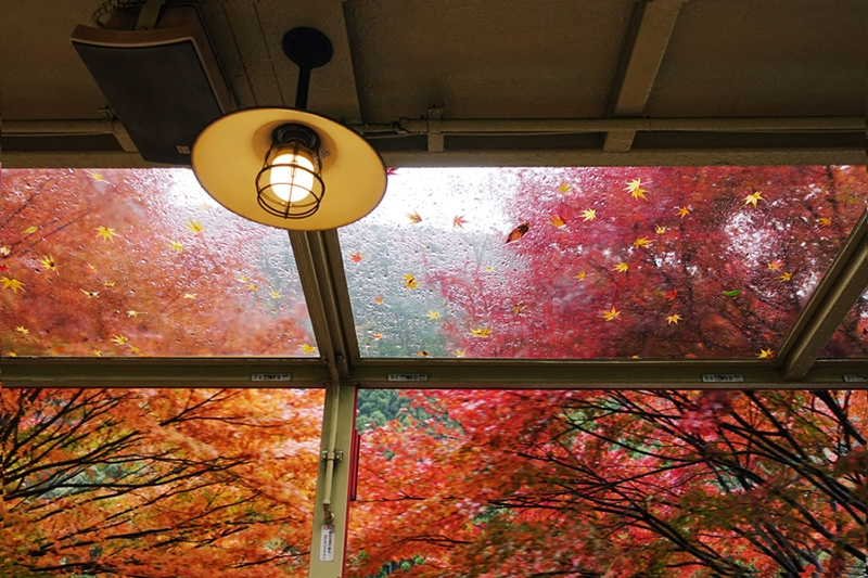 Fall Indoor Air Quality (IAQ), Shot inside an old train in autumn maples in Kyoto, Japan.